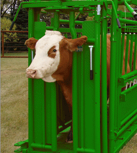 Livestock and Cattle Head Gate