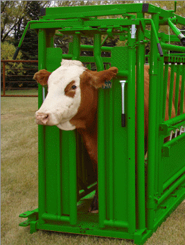 Livestock Head Gate