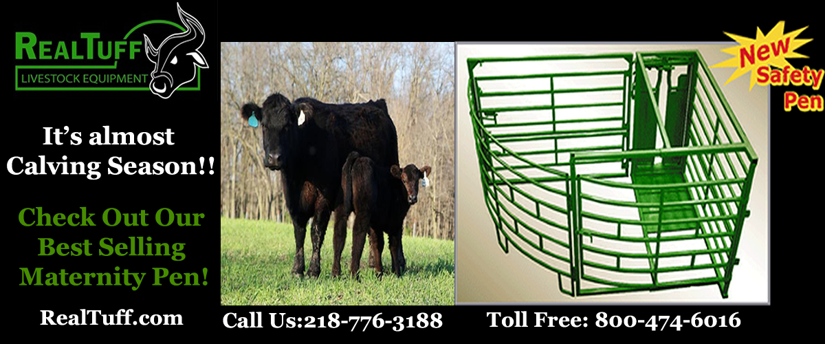 Safe system for working cattle
