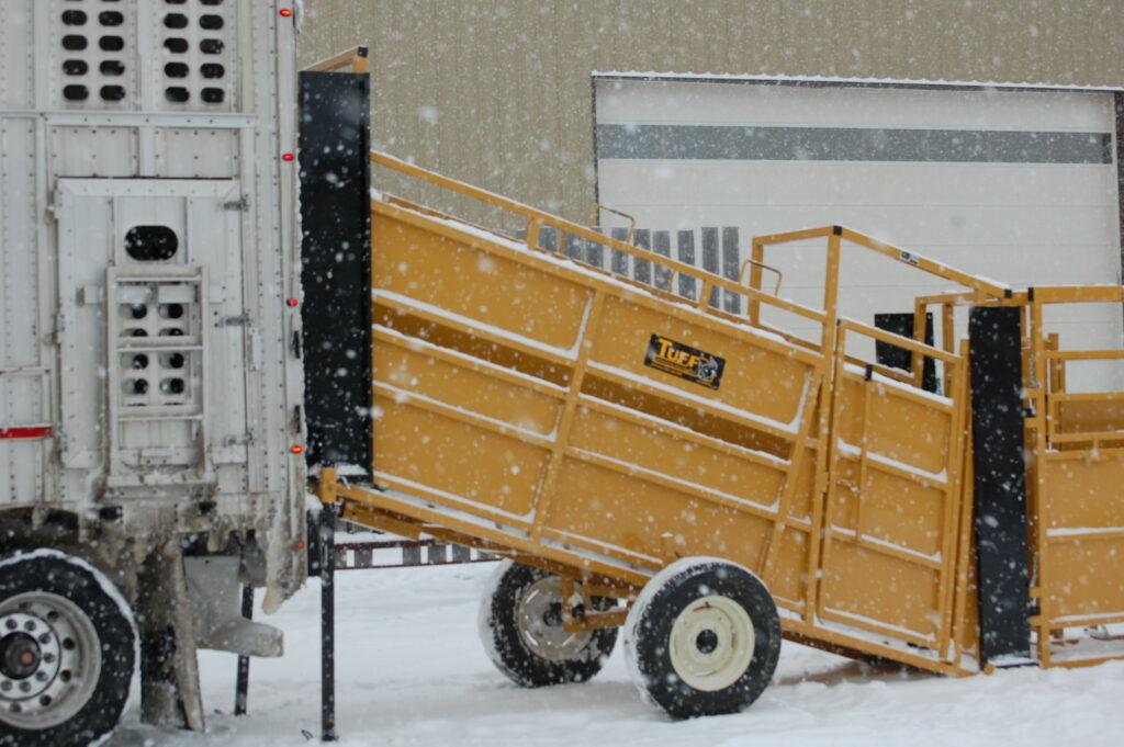 All Purpose Portable Loading Chute-Loading-Cattle-in-semi